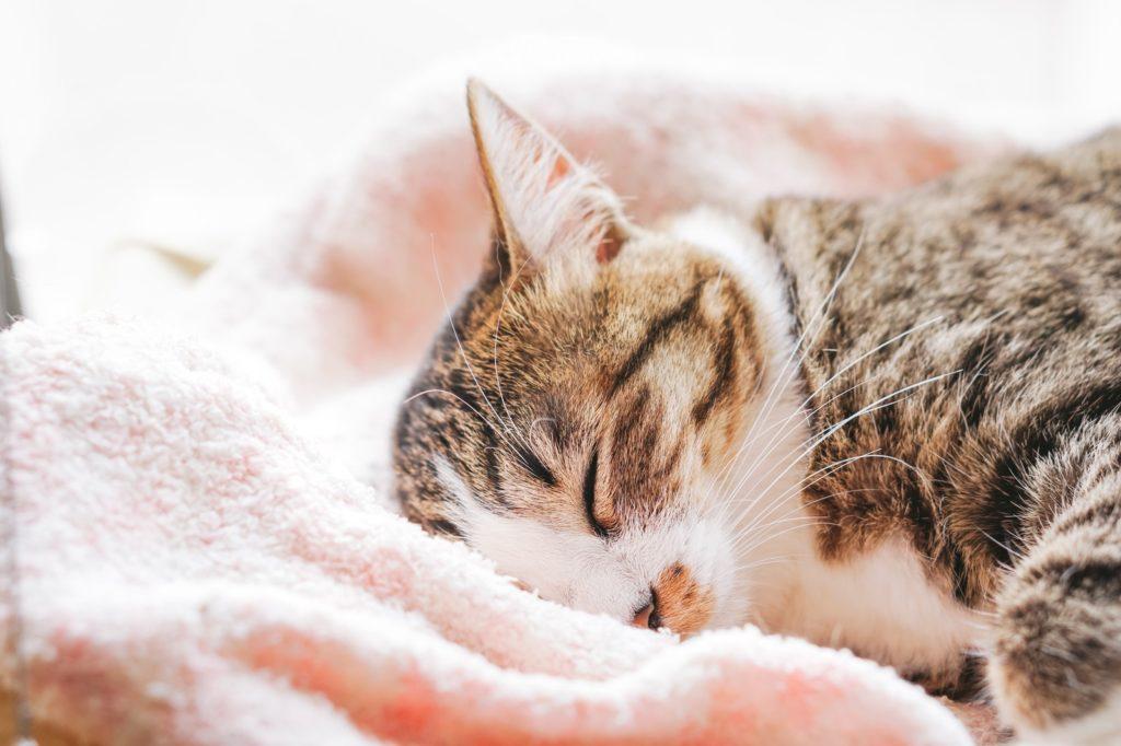 何も考えずに寝ているネコ